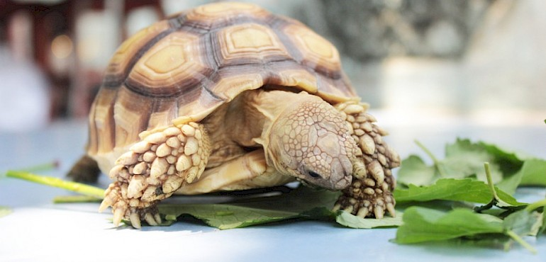 All about vitamins, minerals and Tortoises